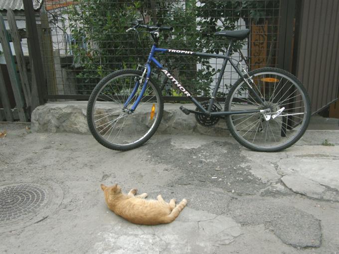 Кот и велосипед