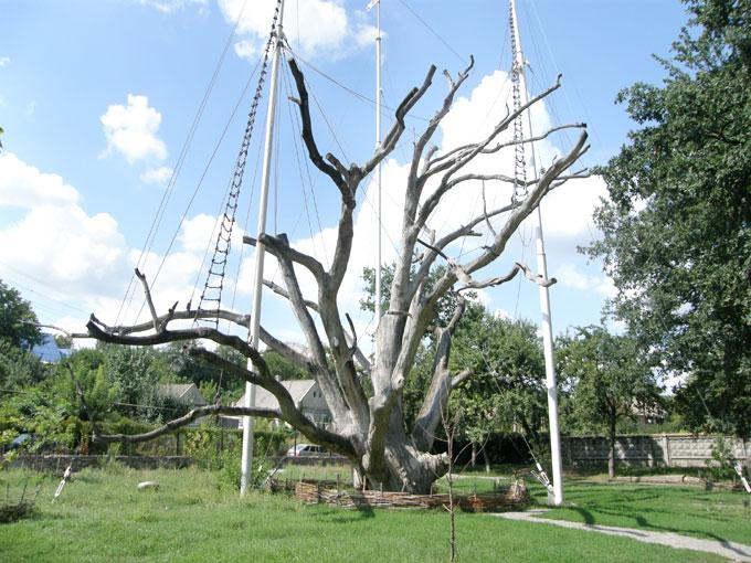 700-летний Запорожский дуб