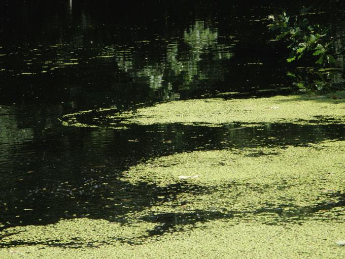 Цветение озера