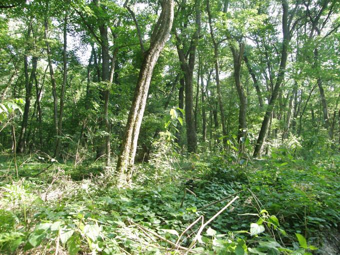 Самарский лес