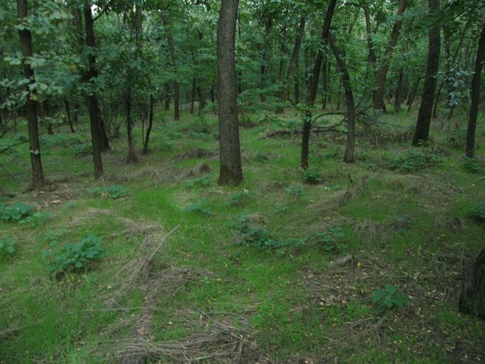Лес вокруг