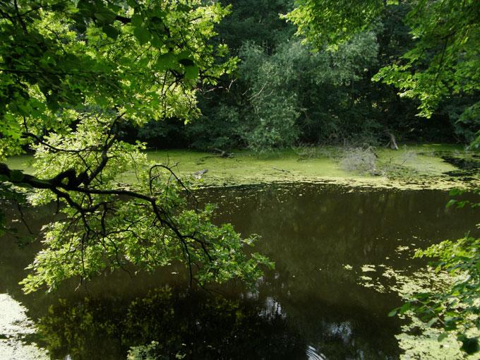 Озеро Колодоватое