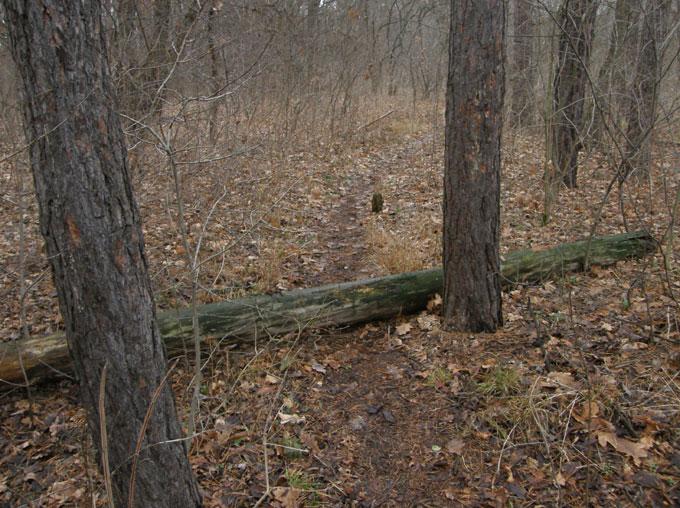 Тропа в самарском лесу