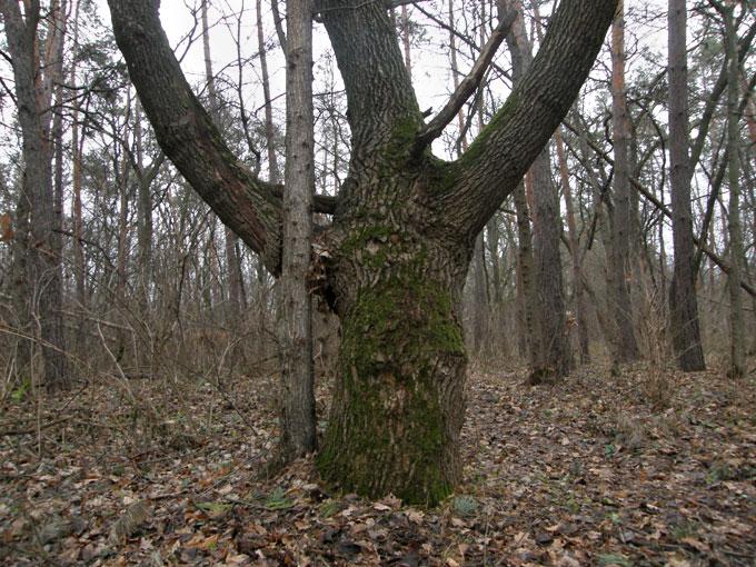 Деревья в самарском лесу